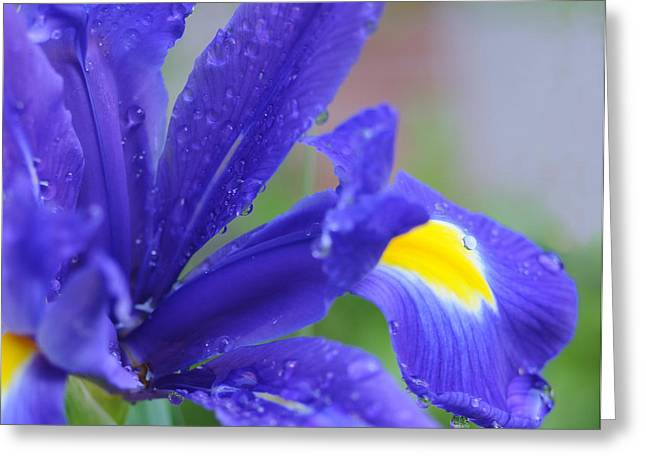 Greeting Card featuring the photograph Blue Iris by Haleh Mahbod