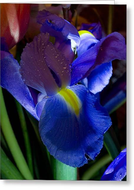 Blue Iris Greeting Card by Joann Vitali