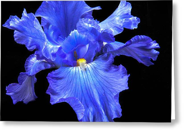 Blue Iris Greeting Card by Robert Bales