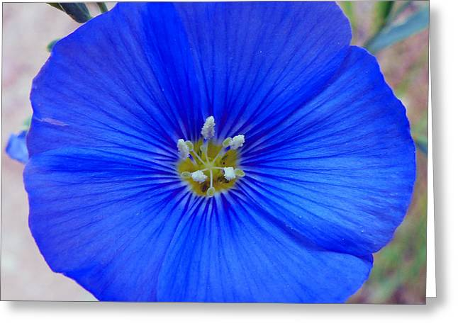 Blue Is Blue Greeting Card