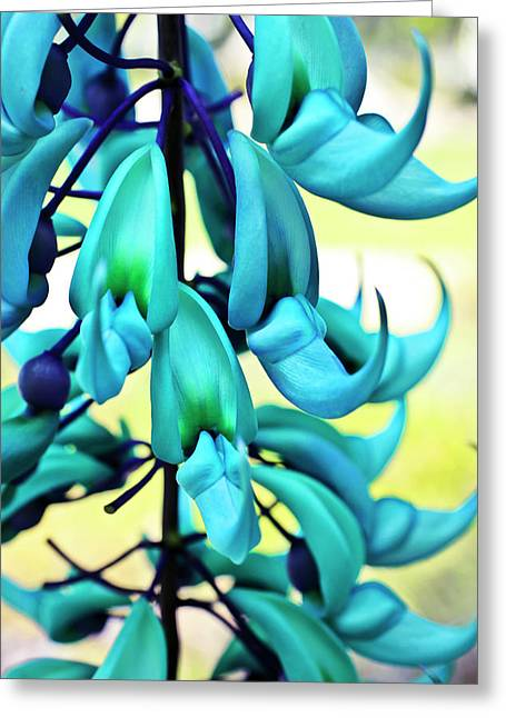 Blue Jade Plant  Hawaii, United States Greeting Card by Scott Mead
