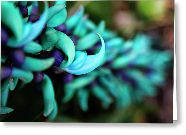 Blue Jade Plant With Purple Flowers Greeting Card by Scott Mead