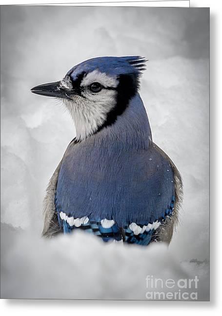 Blue Jay Alert Greeting Card