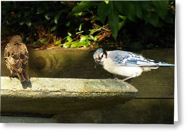 Blue Jay Hello Greeting Card by Lisa Roy