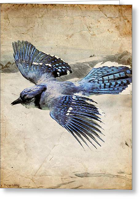 Blue Jay In Flight Greeting Card by Ray Downing