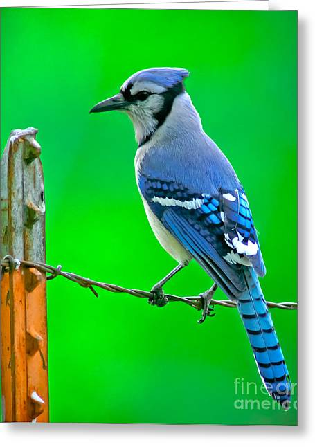 Blue Jay On The Fence Greeting Card by Robert Frederick