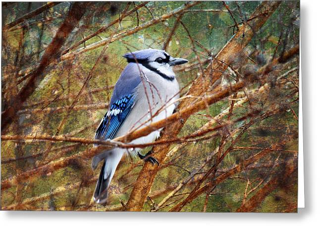 Greeting Card featuring the photograph Blue Jay by Trina  Ansel