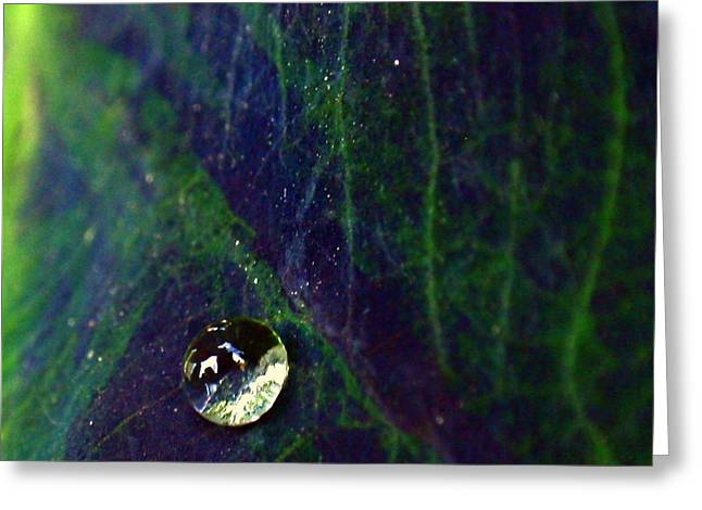 Greeting Card featuring the photograph Blue Leaf by Rona Black