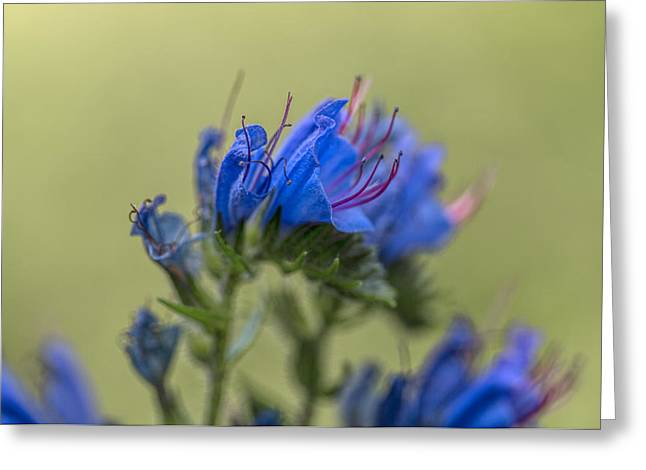Greeting Card featuring the photograph Blue by Leif Sohlman