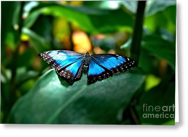Blue Lit Butterfly Greeting Card