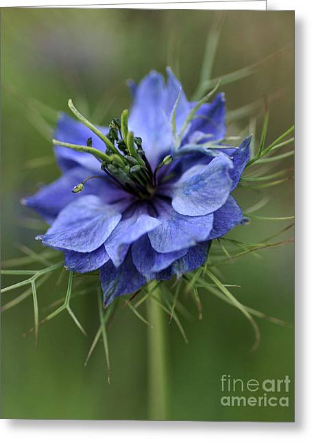 Greeting Card featuring the photograph Blue Love by Joy Watson