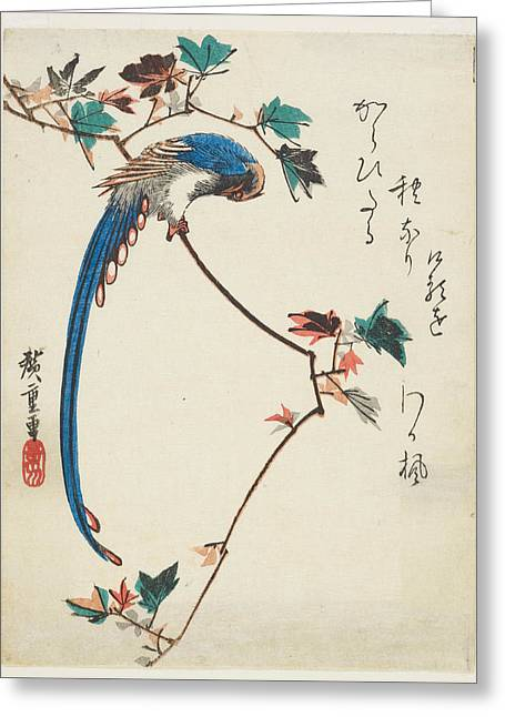 Blue Magpie On Maple Branch Greeting Card