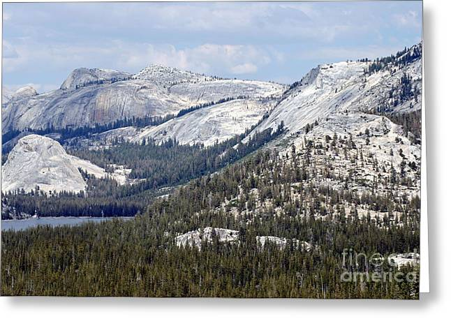 Greeting Card featuring the photograph Blue Majesty by Mary Lou Chmura