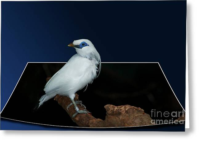 Blue Mask Bandit Bird Greeting Card by Thomas Woolworth