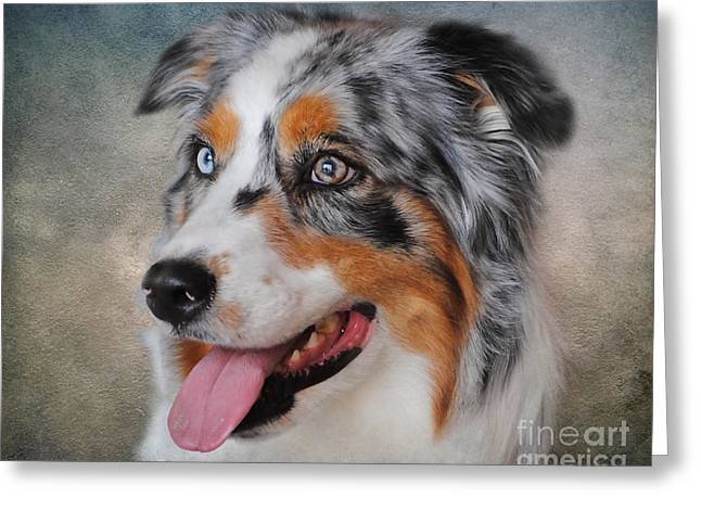 Blue Merle Australian Shepherd Greeting Card