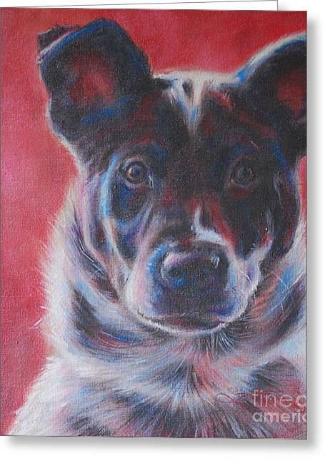 Blue Merle On Red Greeting Card