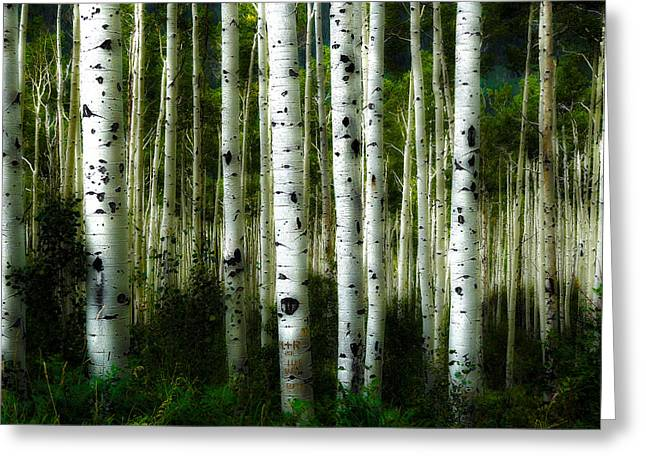 Greeting Card featuring the photograph Blue Mood Aspens I by Lanita Williams