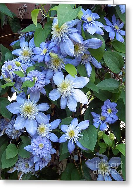 Blue Moon Clematis Greeting Card