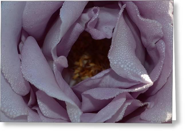 Blue Moon Rose 1.2 Greeting Card
