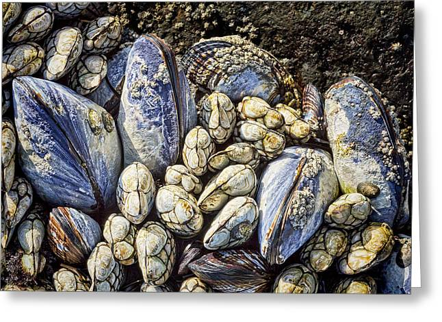 Blue Mussels Greeting Card by Kelley King