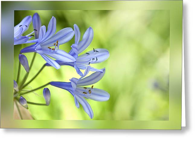 Blue On Green Greeting Card