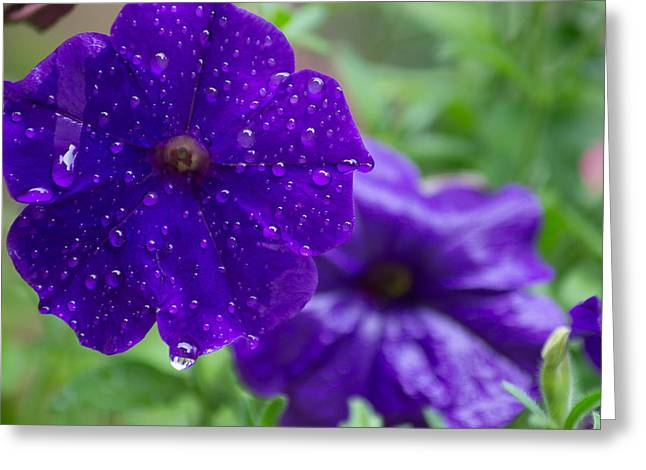 Blue Pansies After A Rain Greeting Card