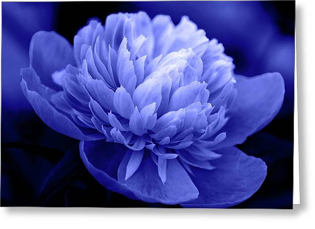 Blue Peony Greeting Card by Sandy Keeton