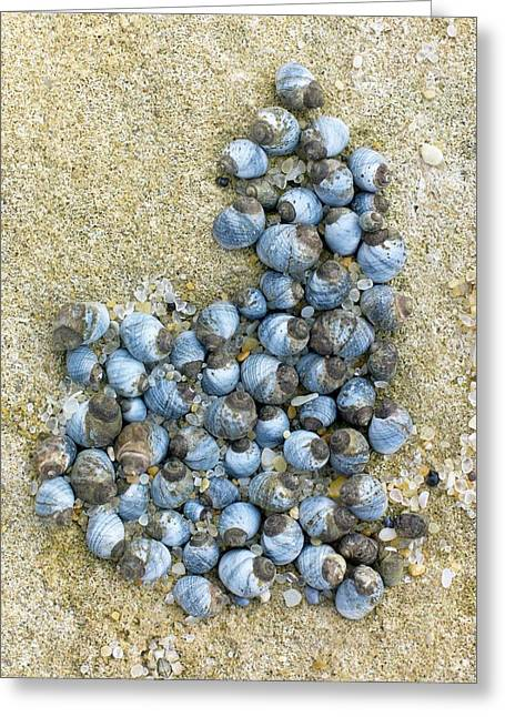 Blue Periwinkles On A Rocky Shore Greeting Card by Dr Jeremy Burgess