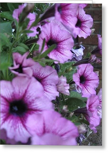 Blue Petunias Greeting Card