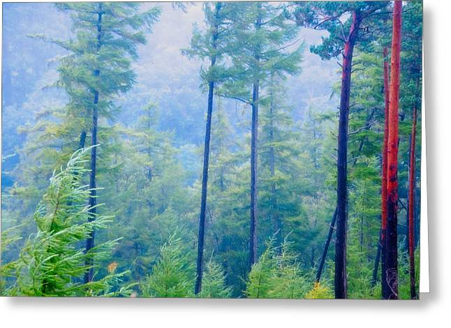 Blue Pine Forest Greeting Card