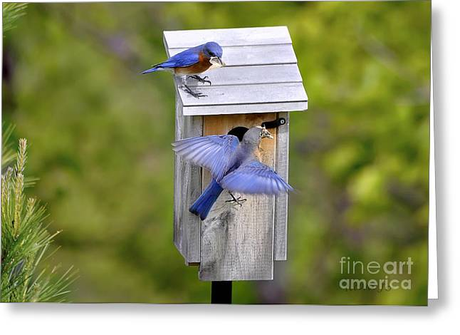 Greeting Card featuring the photograph Blue Plate Special by Nava Thompson