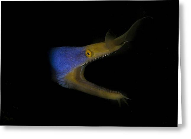Blue Ribbon Eel Greeting Card
