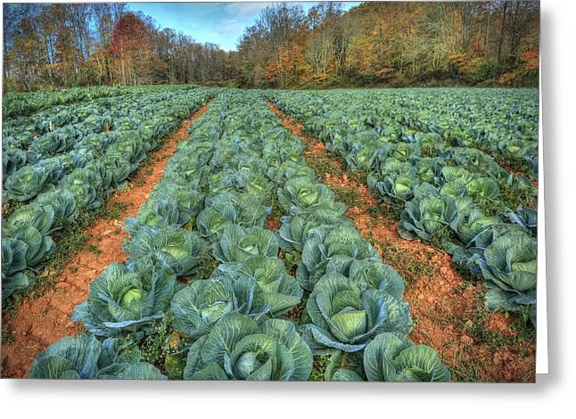 Blue Ridge Cabbage Patch Greeting Card by Jaki Miller