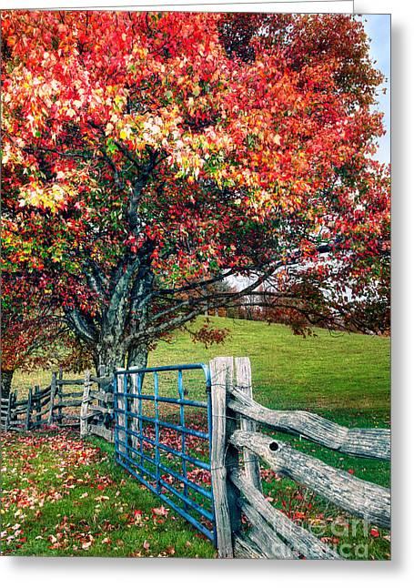 Blue Ridge - Fall Colors - Autumn Maple Tree Fence Gate I Greeting Card by Dan Carmichael