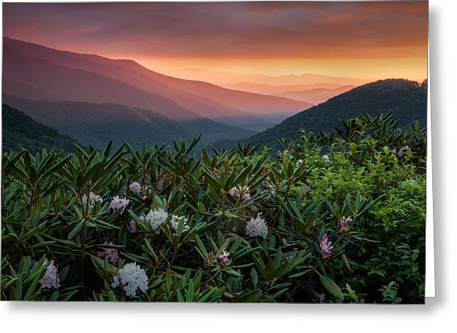 Blue Ridge Morn With Rose Bay Rhododendron  Greeting Card by Rob Travis