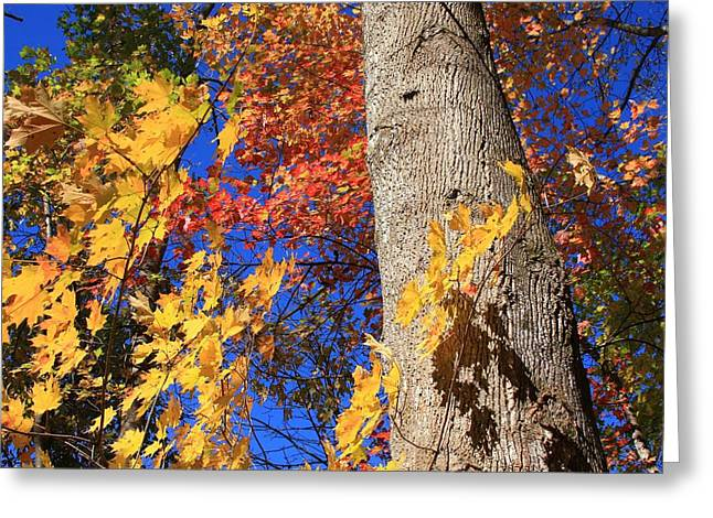 Blue Ridge Parkway Fall Foliage-north Carolina Greeting Card by Mountains to the Sea Photo