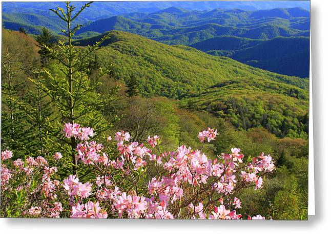 Blue Ridge Parkway Rhododendron Bloom- North Carolina Greeting Card by Mountains to the Sea Photo
