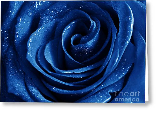Blue Roses Pictures Greeting Card