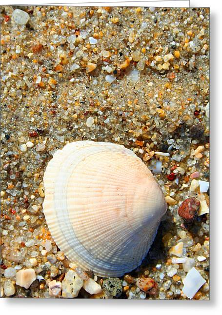 Greeting Card featuring the photograph Blue Shell by Dick Botkin