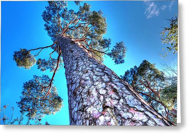 Blue Skies Above Greeting Card