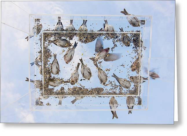 Blue Skies Above The Bird Feeder Greeting Card