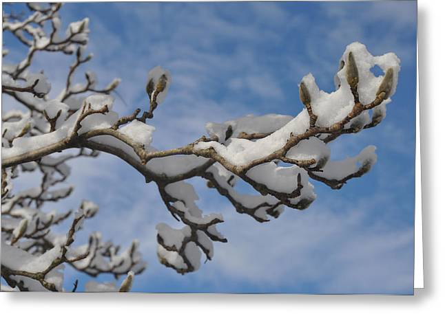 Blue Skies In Winter Greeting Card by Bill Cannon
