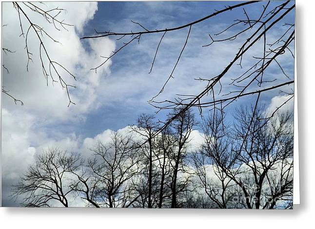 Greeting Card featuring the photograph Blue Skies Of Winter by Robyn King