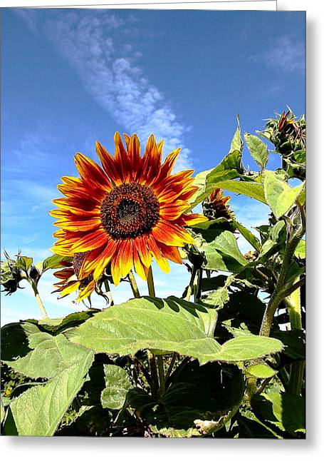 Blue Sky And Sun Flower Greeting Card