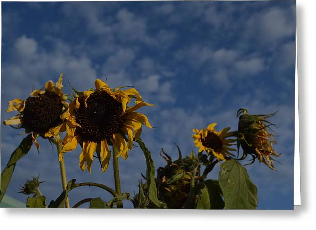Greeting Card featuring the photograph Blue Sky Buddies by Brian Boyle