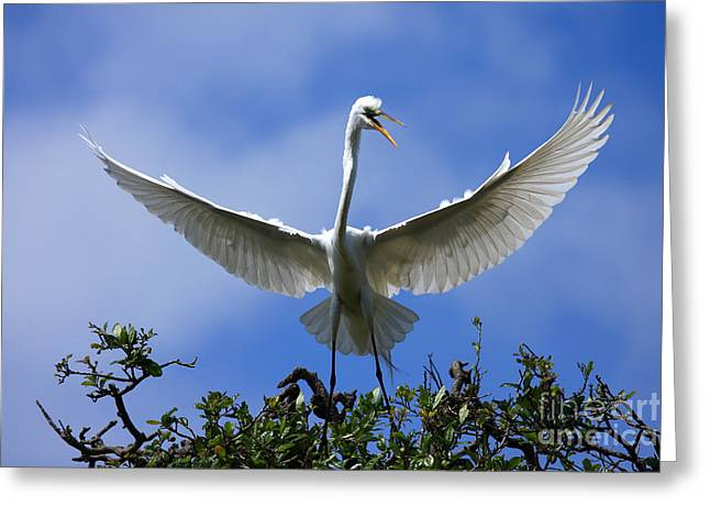 Blue Sky Landing Greeting Card