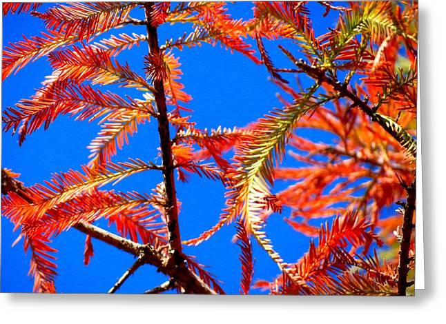 Blue Sky Sunday Greeting Card by David  Norman