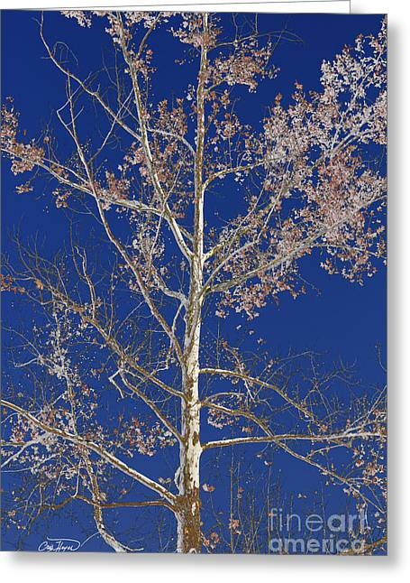 Blue Sky With A Twist Of Birch Greeting Card