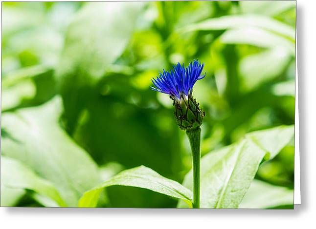Blue Spot In The Green World - Featured 3 Greeting Card by Alexander Senin