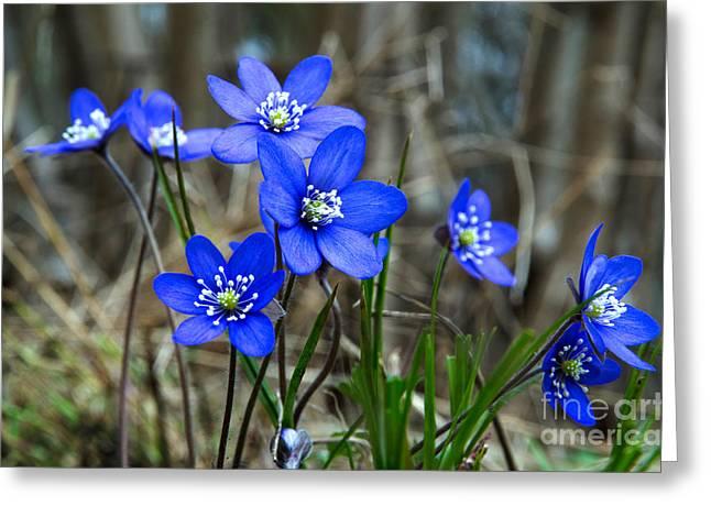 Blue Springtime Greeting Card by Kennerth and Birgitta Kullman